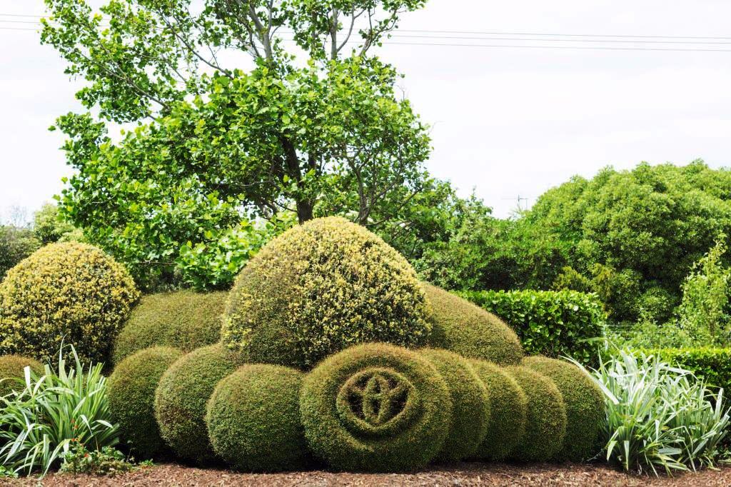 Topiary Toyota Logo